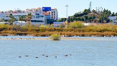 Salar de los Canos, lugar de anidación de aves y donde han sucedido los ataques.