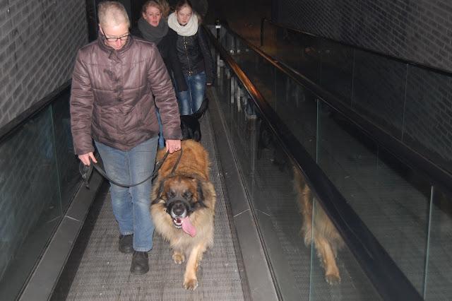 Jonge Hond centrum Emmen - 2012-04-01%2B032.JPG