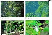 Sejumlah Satwa Langka Ditemukan Kawasan Gunung Sanggabuana Karawang