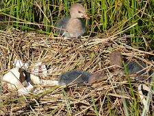 wildlife-birds-6.jpg