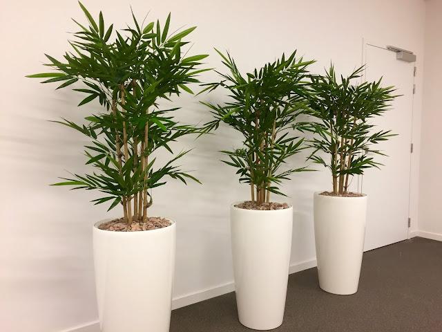 Kamerplanten kopen Online webshop voor grote planten plantenbakken in België prijzen op aanvraag met soorten en bloemen die weinig licht aankunnen en makkelijk te verzorgen zijn