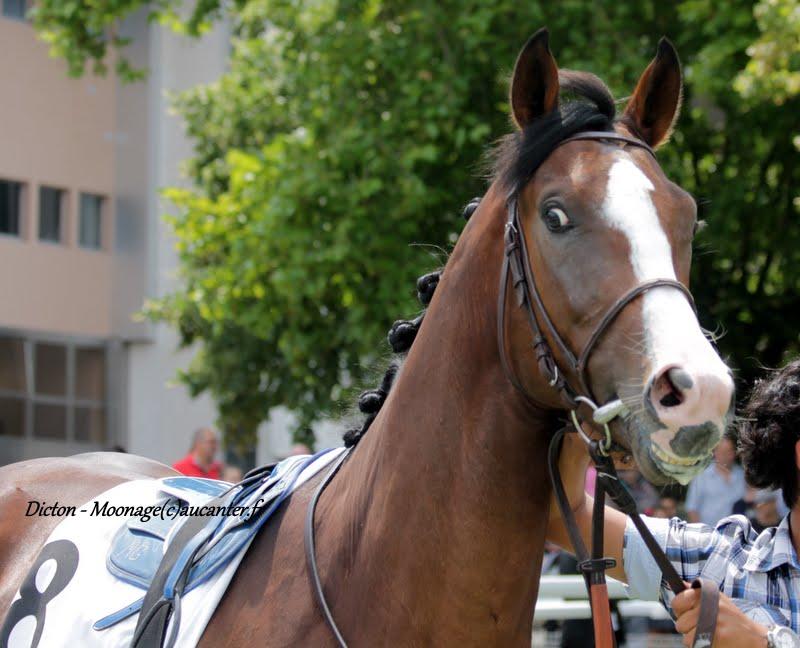 Photos Maisons-Laffitte 5-07-2015 IMG_2144