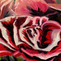 https://picasaweb.google.com/106829846057684010607/Roses#6067159450616598930