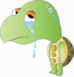 Penyu menangis