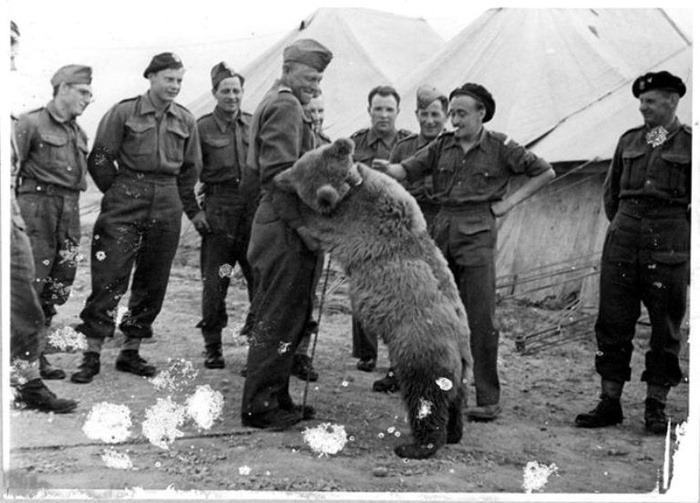 wojtek-soldier-bear-11