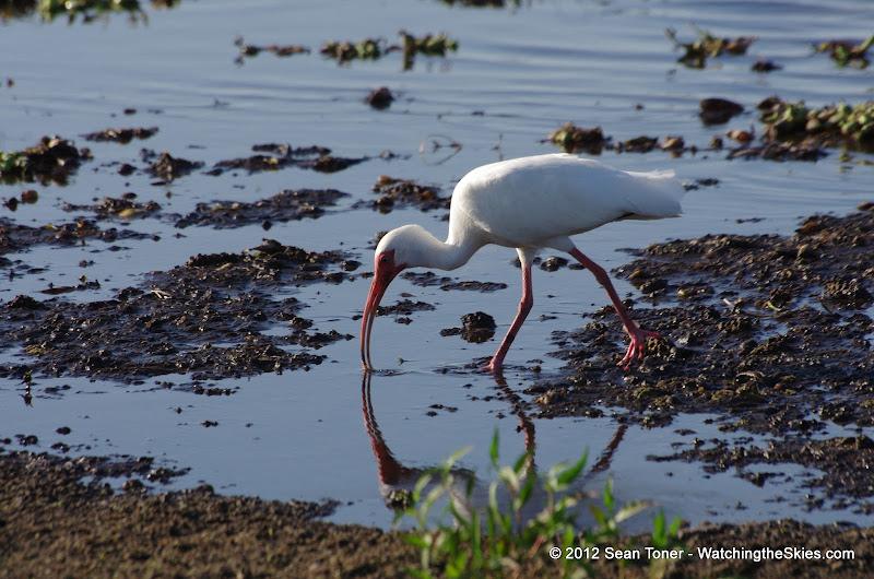 04-06-12 Myaka River State Park - IMGP9913.JPG