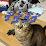 幸田淳志's profile photo