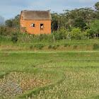 Des rizières, des maisons de pisé, paysage autour de l'école d'Andranovory