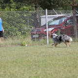 ATM Cup Sporthunde Franken - ATM%2BCup%2BSporthunde%2BFranken%2B122.JPG