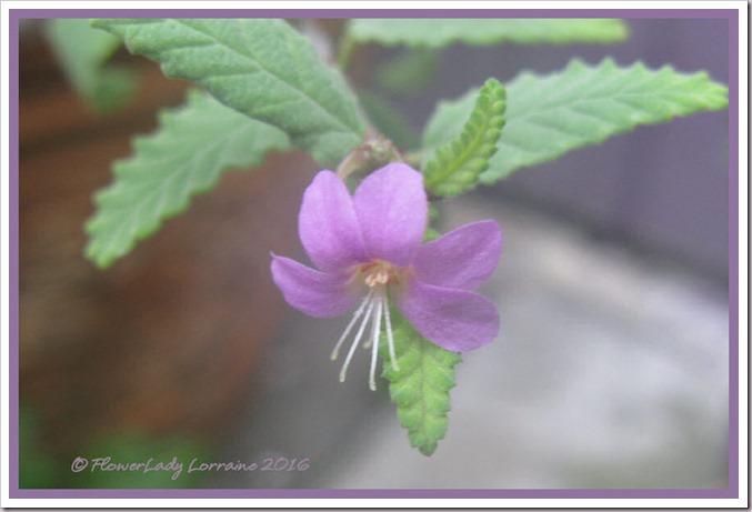 08-09-tea-flower