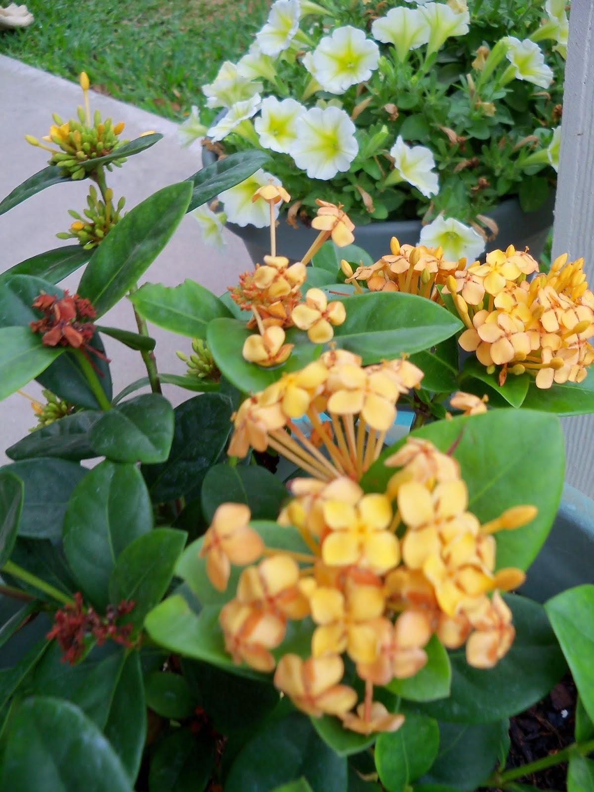 Gardening 2014 - 116_1858.JPG