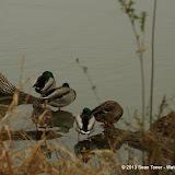 01-26-13 White Rock Lake - IMGP4329.JPG