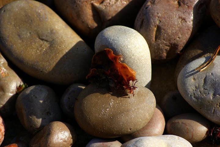 A Pedra