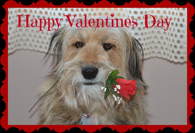 DSC_4149 Valentines day