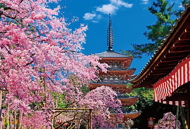 「醍醐寺」的圖片搜尋結果
