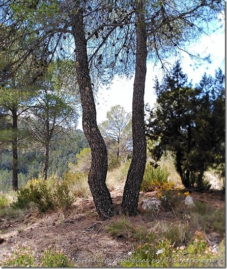 Árbol curvado 2