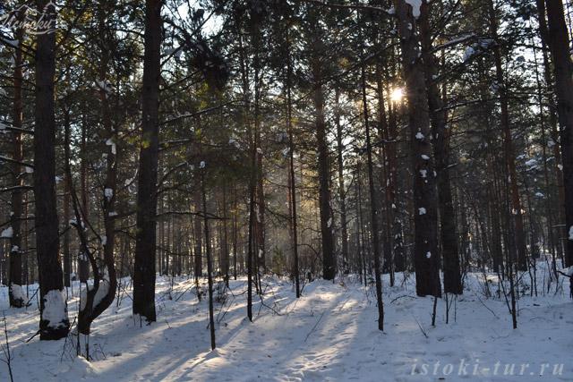 солнце_в_лесу_solntse_v_lesu