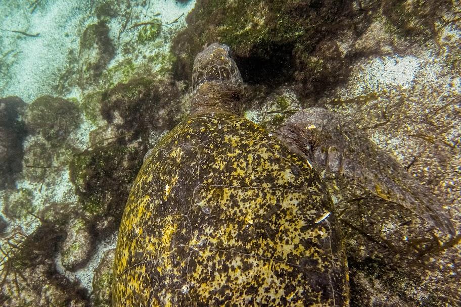 galapagos - Galapagos_FB_2-124.jpg