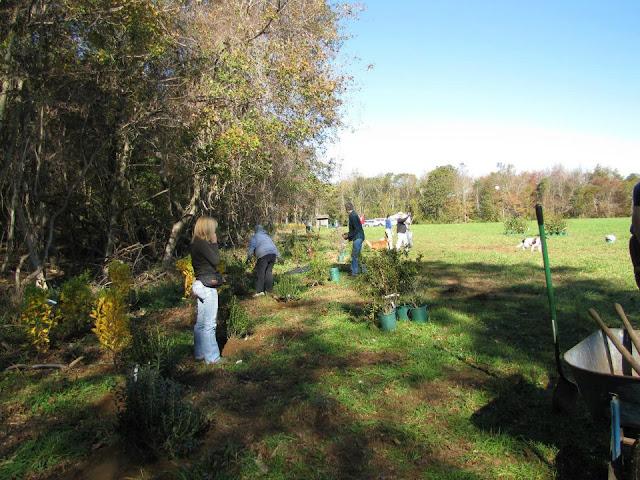Guilford Salt Meadows Sanctuary Planting - 318663_10150343175684480_730539479_8052576_422412395_n.jpg