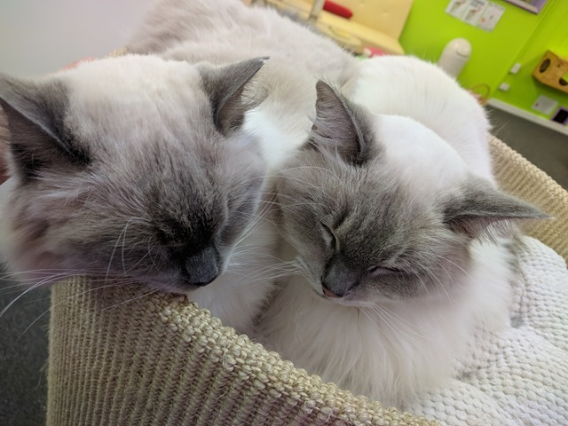 P14_NZ NI Rotorua Cat Cafe_2018-06-13_Jen_IMG_20180614_095529