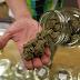 Mississippi Supreme Court Strikes Down Voter-Approved Medical Marijuana Initiative