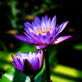 by Rajarshi Das - Flowers Flower Arangements (  )