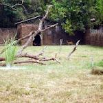 chattbir zoo1.jpg
