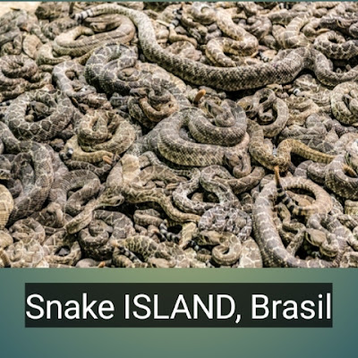 SNAKE ISLAND, BRASIL -  Restricted places of the world