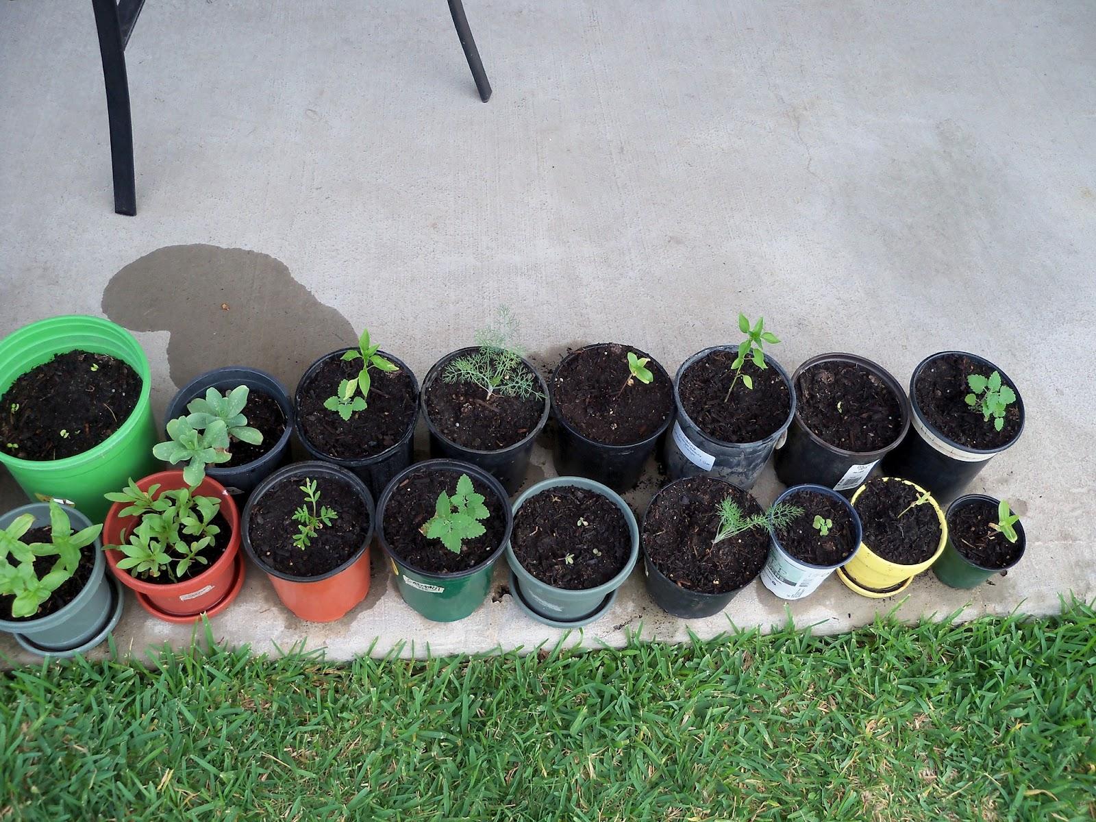 Gardening 2011 - 100_8934.JPG
