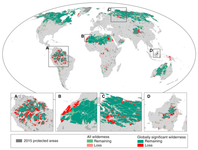 Change in the Distribution of Wilderness and Globally Significant Wilderness Areas since the Early 1990s. Globally significant wilderness areas are defined as wilderness areas >10,000 km2. The insets are focused on the Amazon (A), the western Sahara (B), the West Siberian taiga (C), and Borneo (D). Graphic: Watson, et al., 2016 / Current Biology