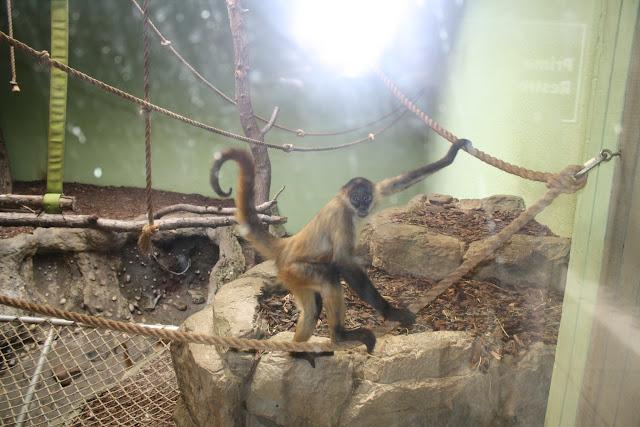 Zoo Snooze 2015 - IMG_7293.JPG