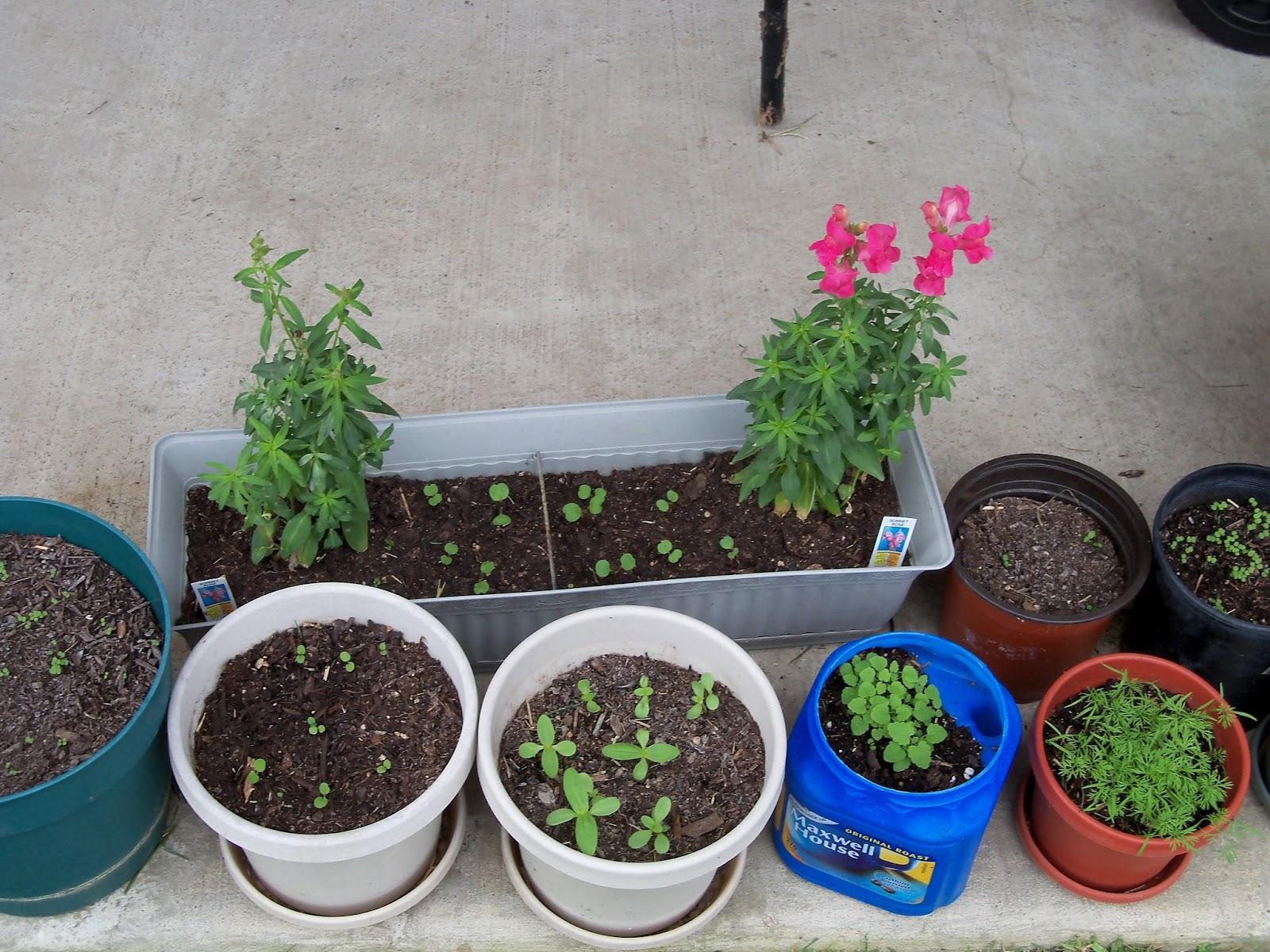 Gardening 2011 - 100_6824.JPG