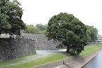 熊本城:輪取り