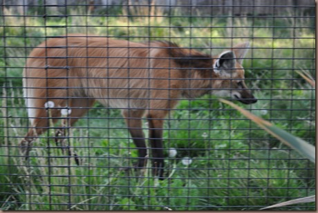 08-17-16 Boise Zoo 11