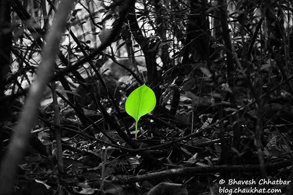 A beautiful single leaf standing out in the darkness of the forest
