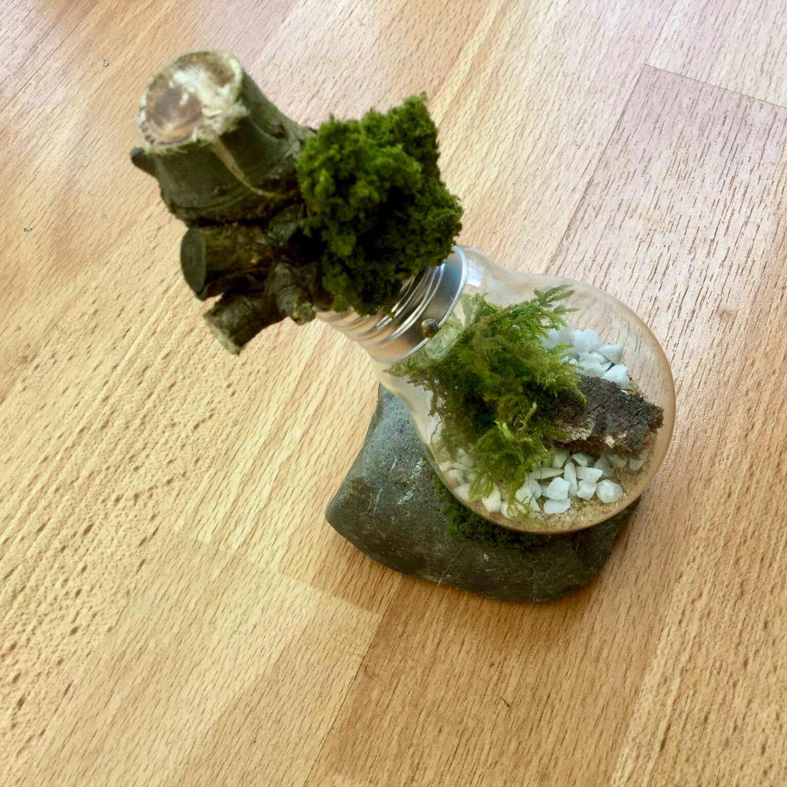 living garden in a lightbulb assemblage art