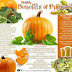 Pumpkin benefits and secrets