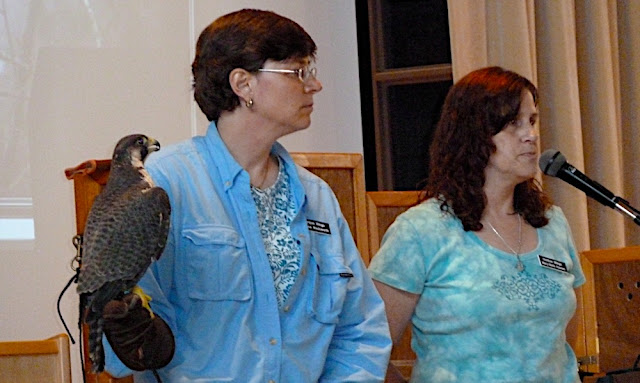 Jeanne and Mary-Beth answer questions about the peregrine falcon.