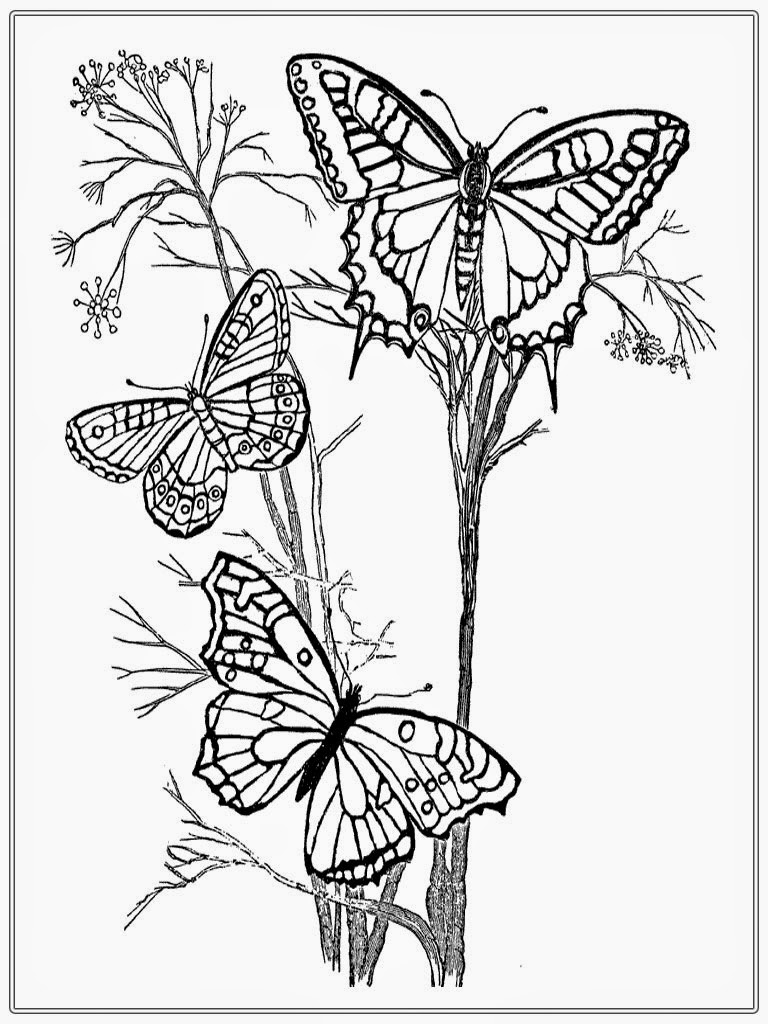 Best HD Intricate Butterfly Coloring