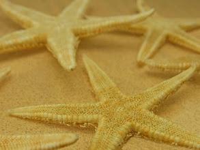 Photo: Starfish on a tan sand background