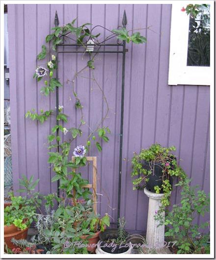 03-06-03-06-norfolk-garden