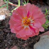 Gardening 2010 - 101_1633.JPG