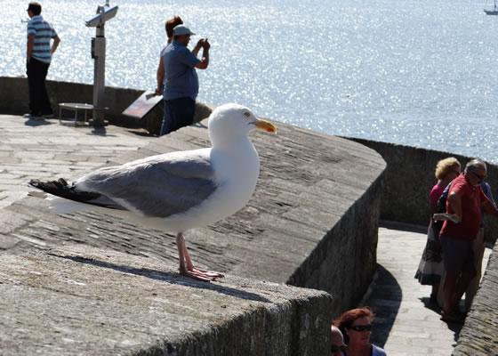1608.jpg - Les oiseaux � Saint-Malo par Bretagne-web.fr
