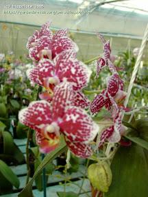 horticulture : les producteurs d'orchidées et de plantes carnivores utilisent la sphaigne depuis plusieurs siècles