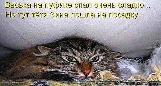 1429356161_kotomatrica-24