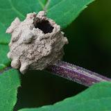 potter-wasp-nest_MG_7300-copy.jpg