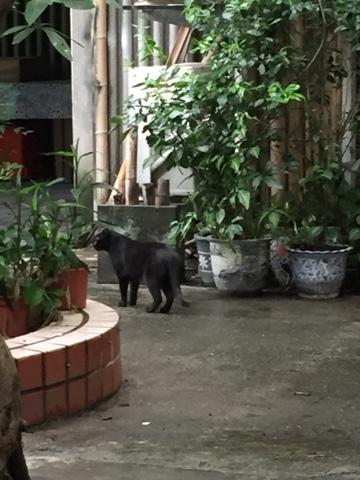 雨上り 黒猫