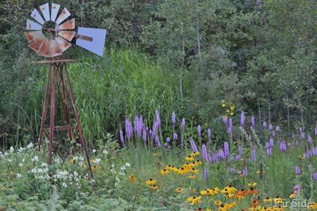 The Wildgardens August 15