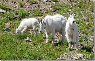 Hidden Lake Trail Glacier NP MT 066