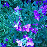 Gardening 2013 - IMG_20130316_102852.jpg